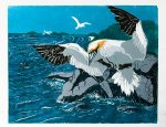 chrismound-gannet