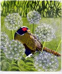 chrismound-pheasant