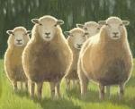 barbara-bernard-five-sheep-oil-on-board-32cmx39cm