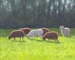barbara-bernard-six-sheep-oil-on-board-26cmx31cm