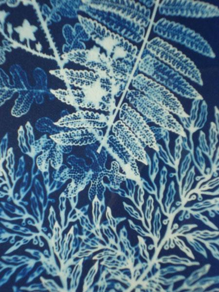 poppy-szaybo-cyanotype-print